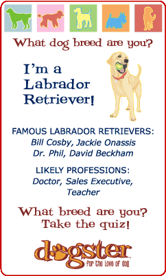 What dog breed are you? I'm a Labrador Retriever! Find out at Dogster.com