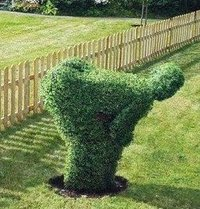 Grass_pic